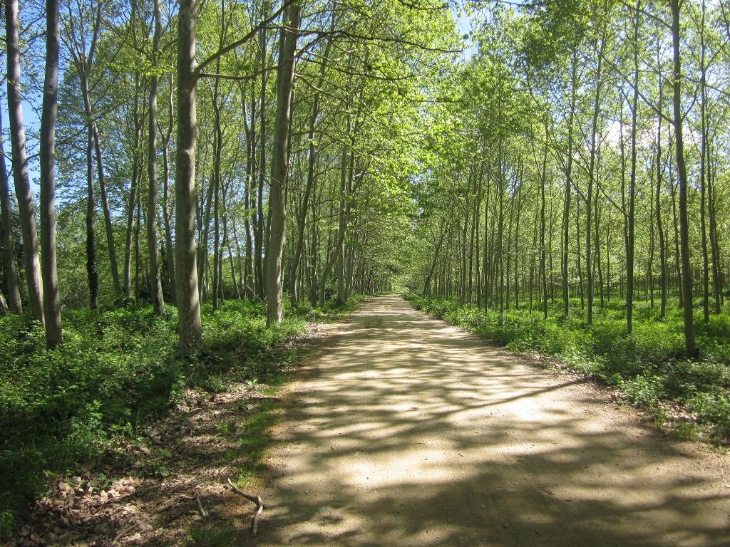 http://www.santceloni.cat/ARXIUS/minisites/web_turisme/rutes_i_llocs/passejades_natura/Plantacio_de_plataners.JPG